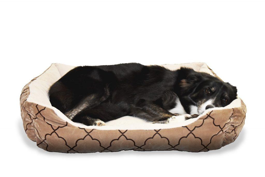 כלב יושן במיטה